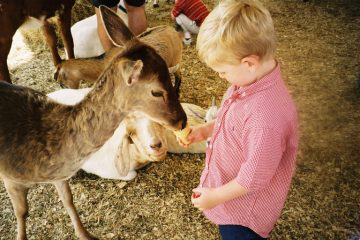 Petting Zoo What to do in Edmonton this Weekend