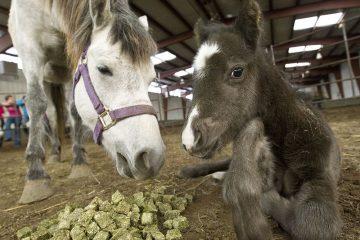 Horse Sense Petting Zoo