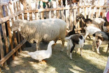 Petting-zoo-in-Edmonton-and-Area