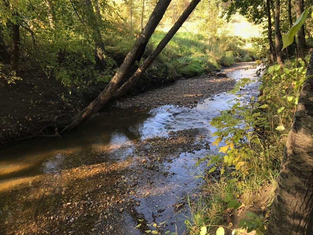 Explore Mill Creek Ravine Park