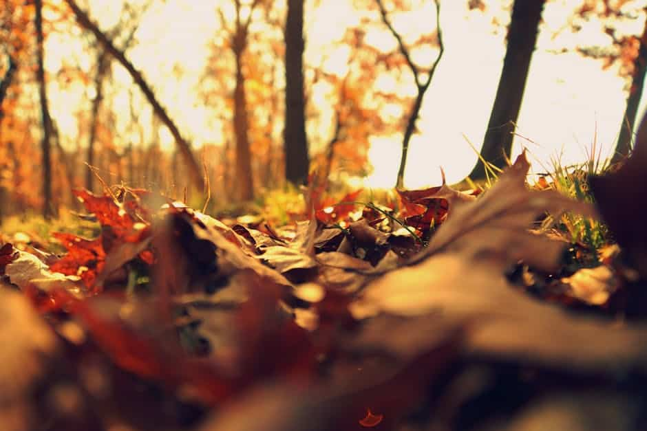 5 Gorgeous Trails to Take Your Kids to See Fall Foliage in Edmonton