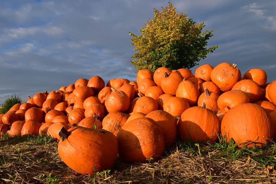 Giant Pumpkins and the Midway at the Smoky Lake Pumpkin Festival | 10/7