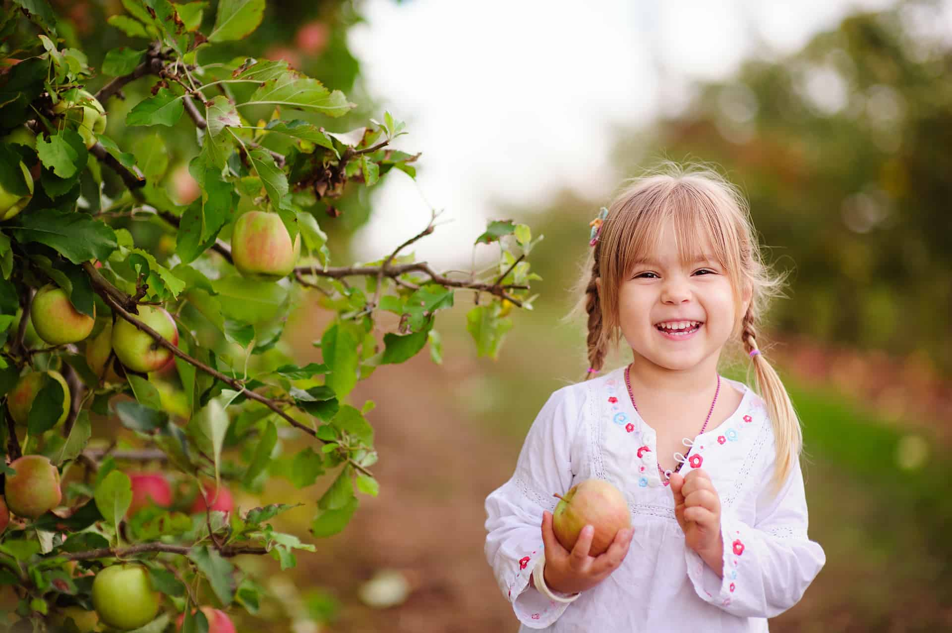 Use this Map to Find Edible Fruit Trees in the City of Edmonton
