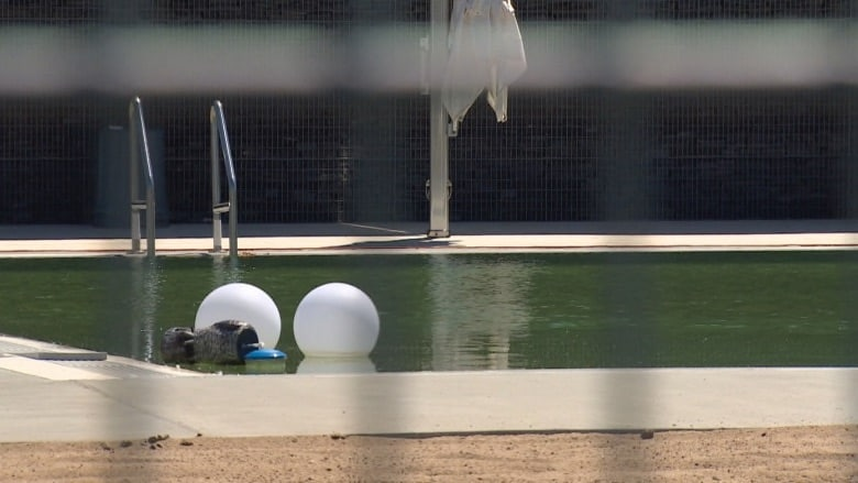 Borden Natural Swimming Pond Opens for the Season This Week