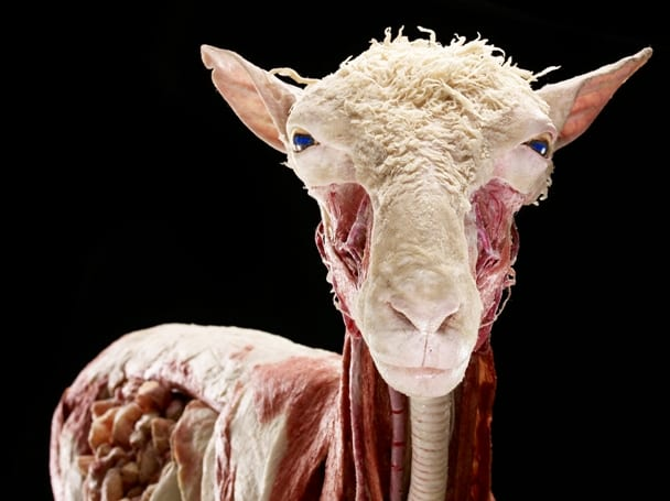 Body Worlds: Animal Inside Out Opens Today at Telus World of Science