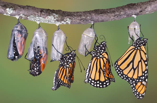 Order Your Home Butterfly Raising Kit Starting Today at Education Station