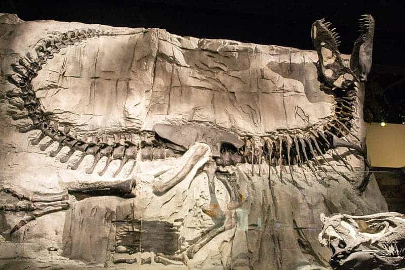 Road Trip: Get Free Admission to Royal Tyrrell Museum on Family Day
