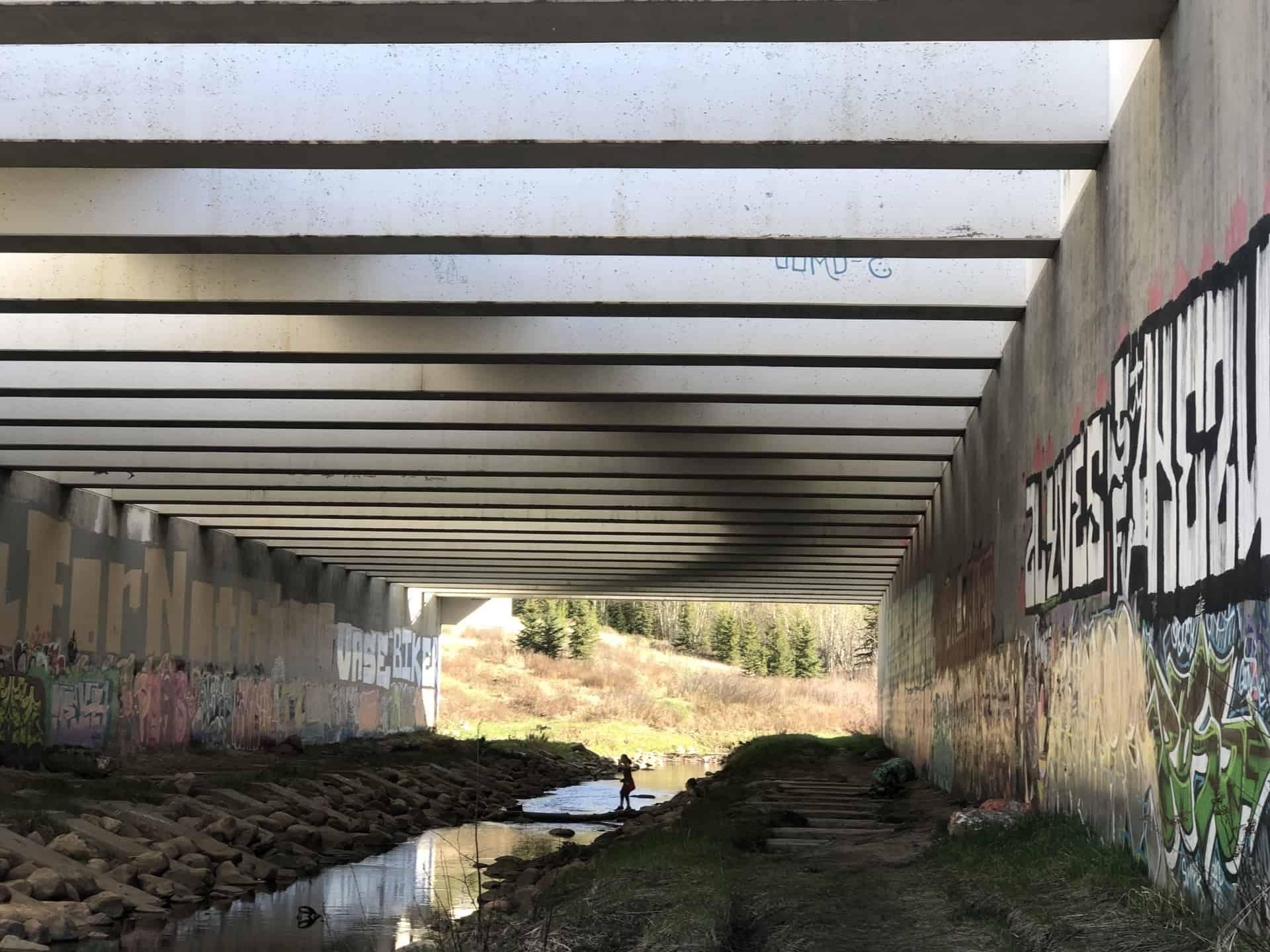 Explore The Wildlife Underpass