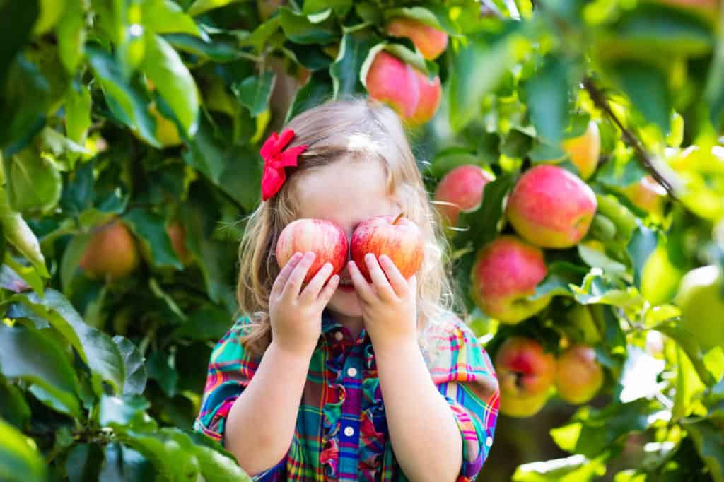 Everything You Need to Know About U-pick Apples at Attracted to Apples
