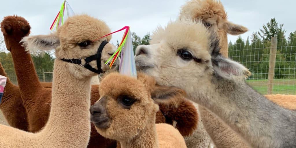 5 Edmonton Kids Birthday Parties that Bring the Entertainment to You