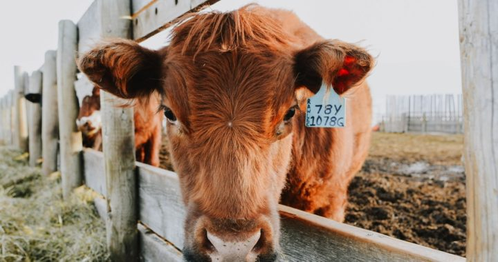 This Alberta Farm is Doing Virtual Farm Tours Every Wednesday and Sunday